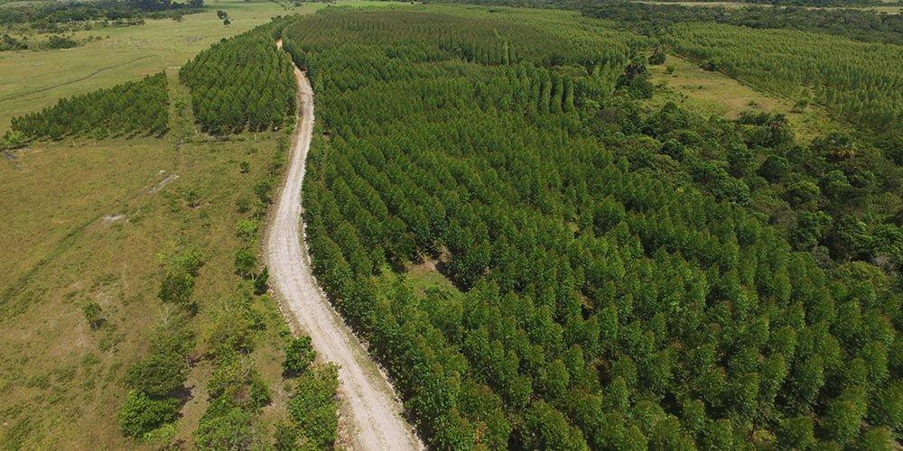 Reforestación Comercial