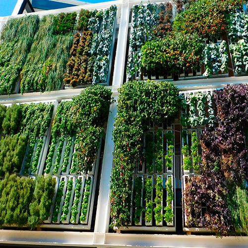 jardines verticales ecoflora sas